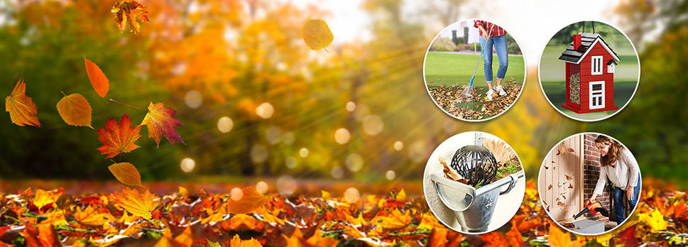 Prenez soin de votre jardin pour l'automne